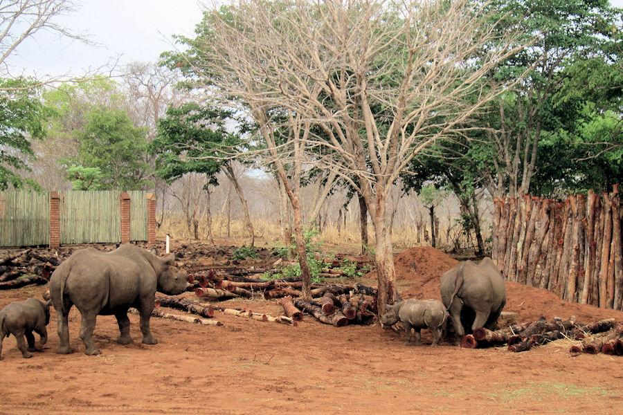 safari afrika familie